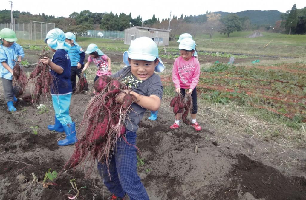 収穫の喜び「秋の芋掘り遠足」(全学年)