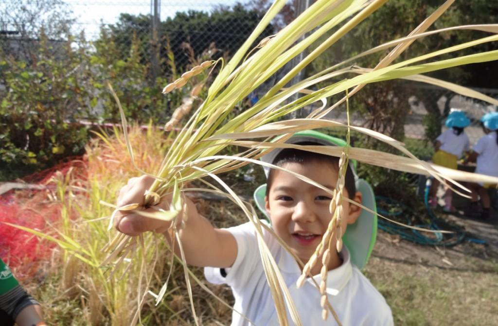 園生活の中で稲の生育を肌で感じる「たんぼ」