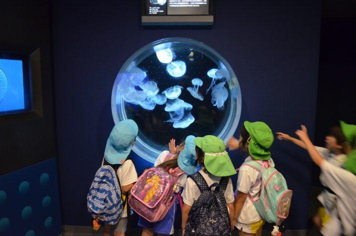 園外保育(年長組水族館へ行きました🐟)